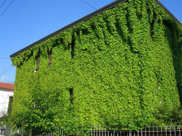 facciate verdi ombreggianti - Le facciate verdi 4