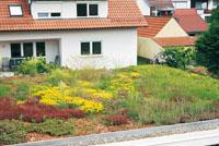 stratificazione-tetto-verde-dopo