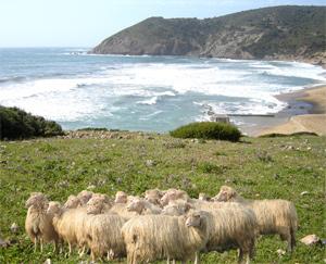 isolanti - Tetto in pura lana vergine di pecora sarda 38
