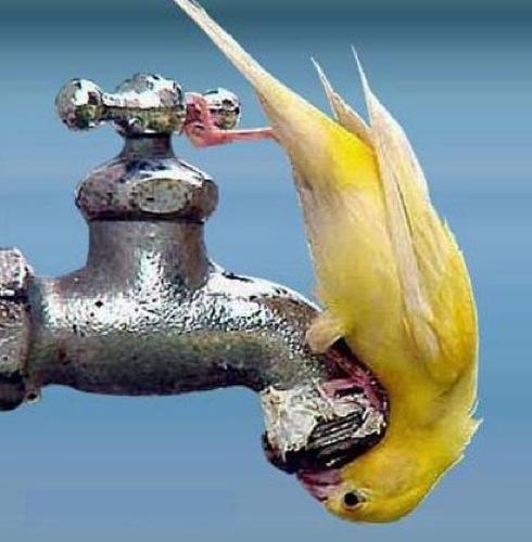 sanitaria - La VMC ci fornisce l' aria da respirare, ma l' acqua da bere? 18