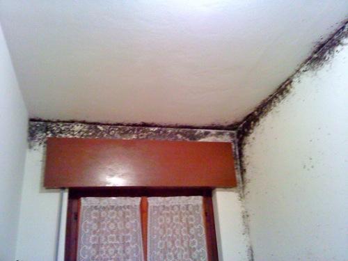 Leggi argomento problema muffa - Alzare tetto casa ...