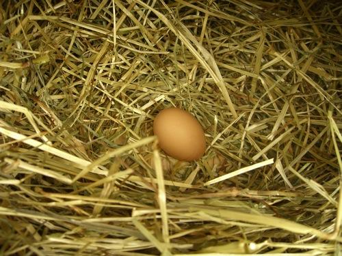 primo uovo