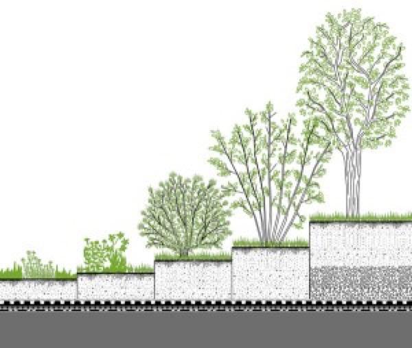 tetto-verde-tetto-laterizio-04