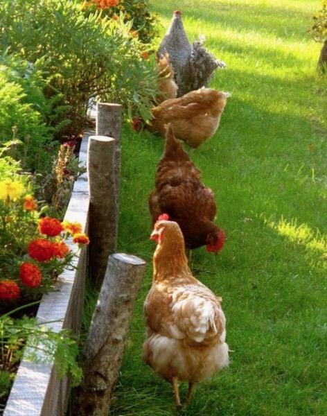 salubrità - Uova bio nella tua casa bio 2