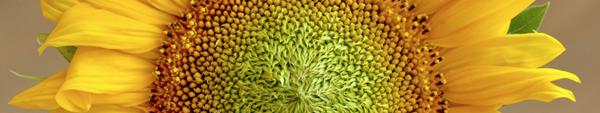 nozioni materiali naturali - materiali bioecologici per ristrutturare o costruire più naturale 18