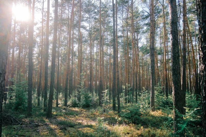 feng shui - Energia legno dalla teoria dei Cinque elementi 8